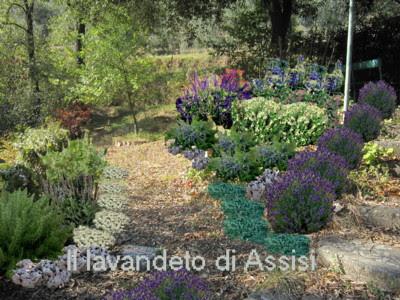 Progetti giardini privati gratis on line con piante - Progetto piccolo giardino ...