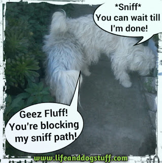 Buffy and Fluffy in garden sniffing.