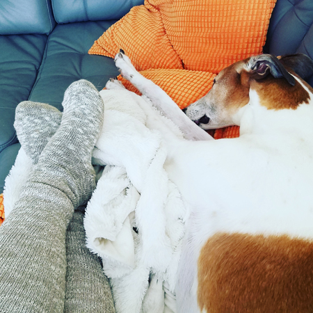 image of my socked legs from the knees down, beside Dudley the Greyhound on the couch