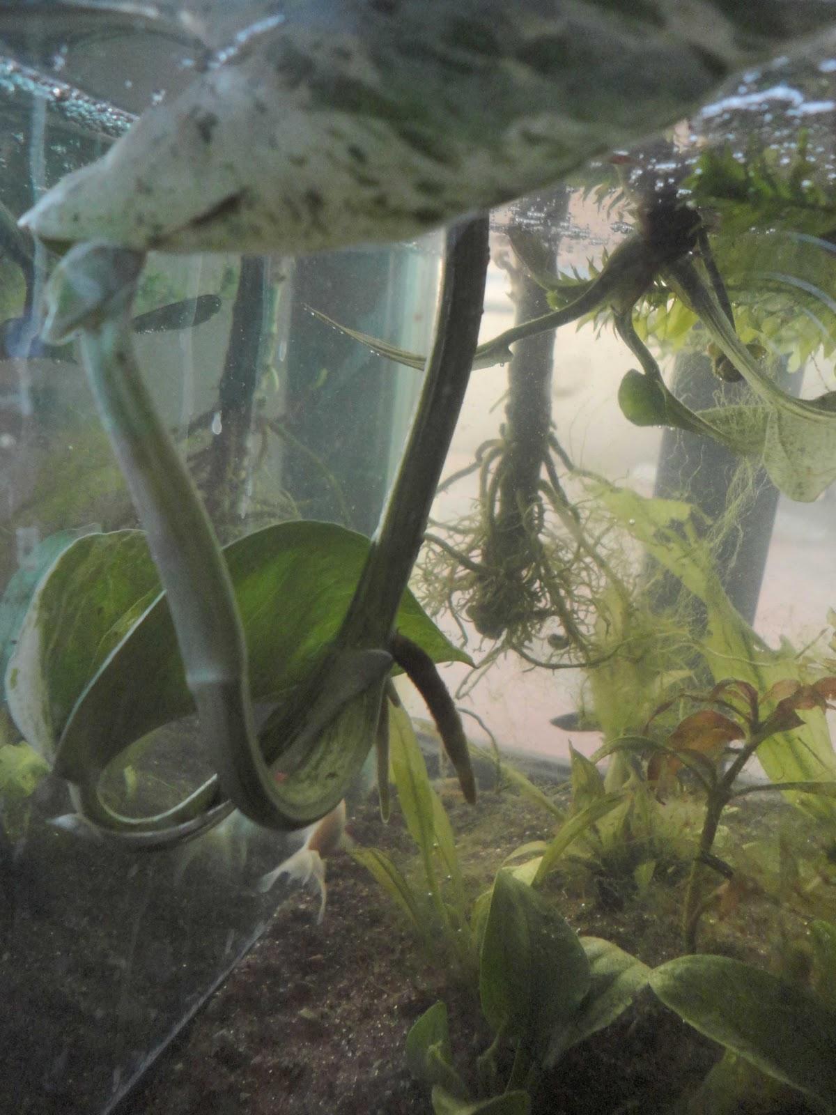 Acuario sustentable Acuaponia en acuarios