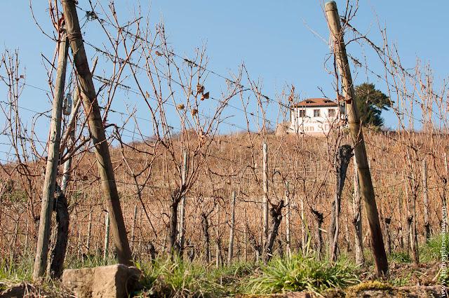 Ribeauville viñedos Alsacia