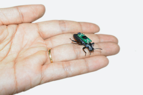 علماء ينجحون تحويل حشرة روبوت