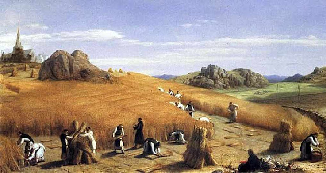 Monges na colheita de trigo