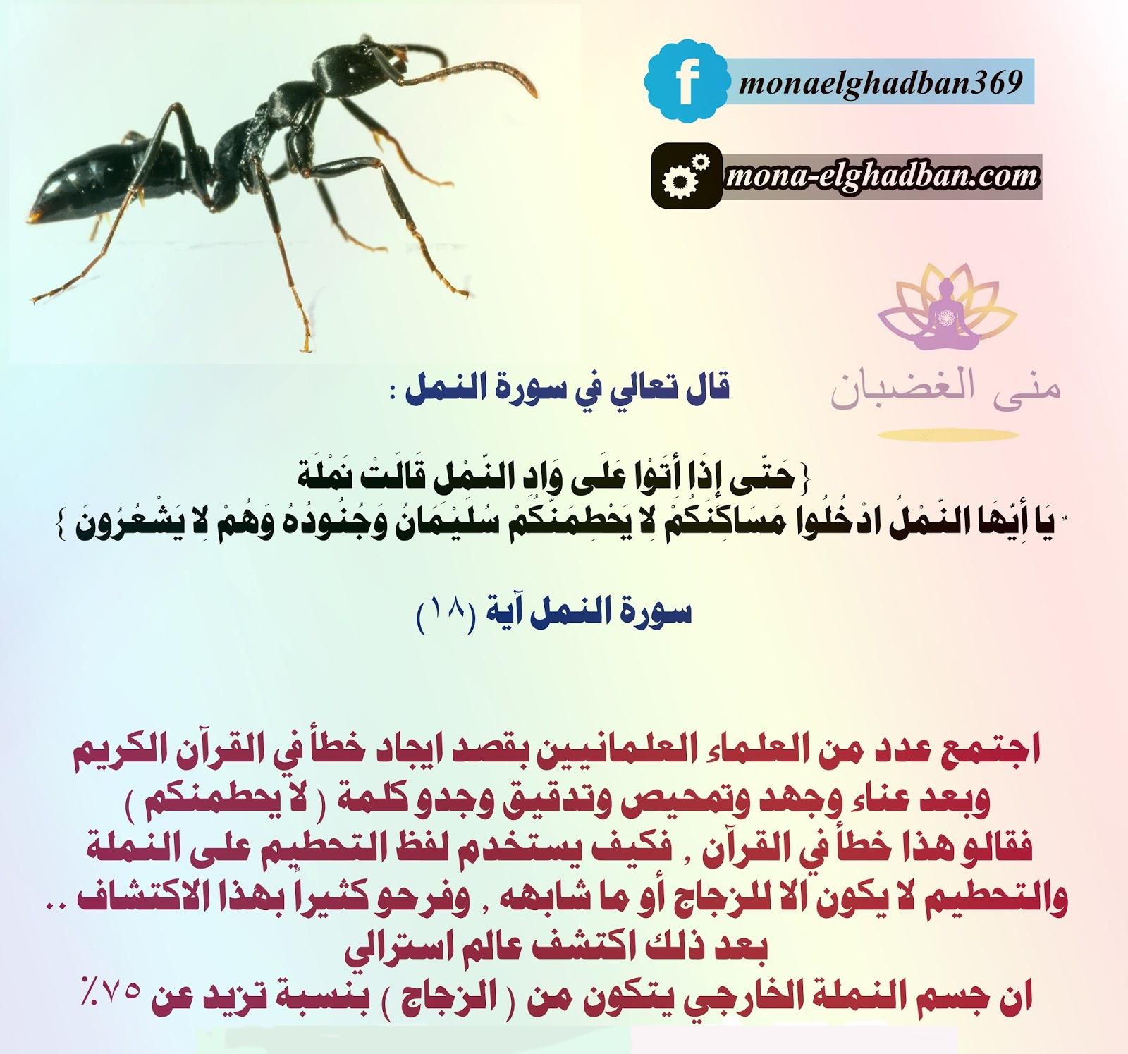 كيف تتواصل مع النمل وتطلب منه الخروج من منزلك منى الغضبان