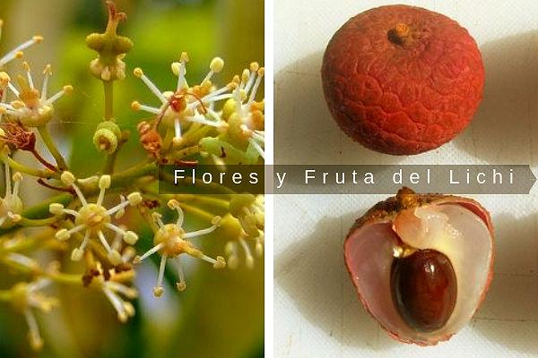 Imagen de la fruta y flores del Litchi chinensis, tambien conocido como Lychee