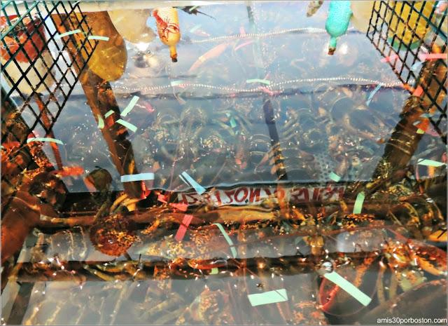 The Lobster Pool Restaurant: Langostas en la Pecera del Restaurante