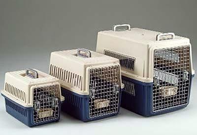 Tips Membawa Kucing Dalam Perjalanan Jauh Mudik Keluar