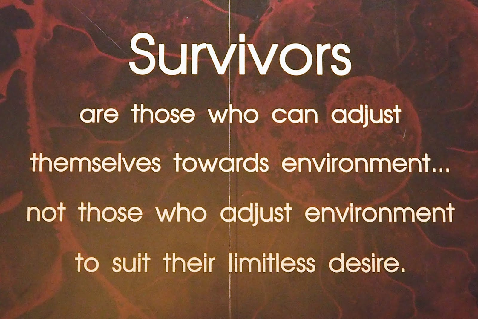 who are the survivors