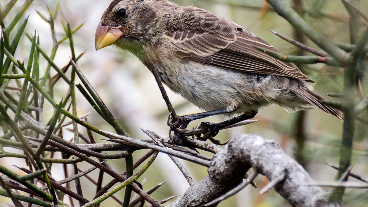 سر اختلاف أشكال وجوه البشر يكمن في جينات عصافير داروين!