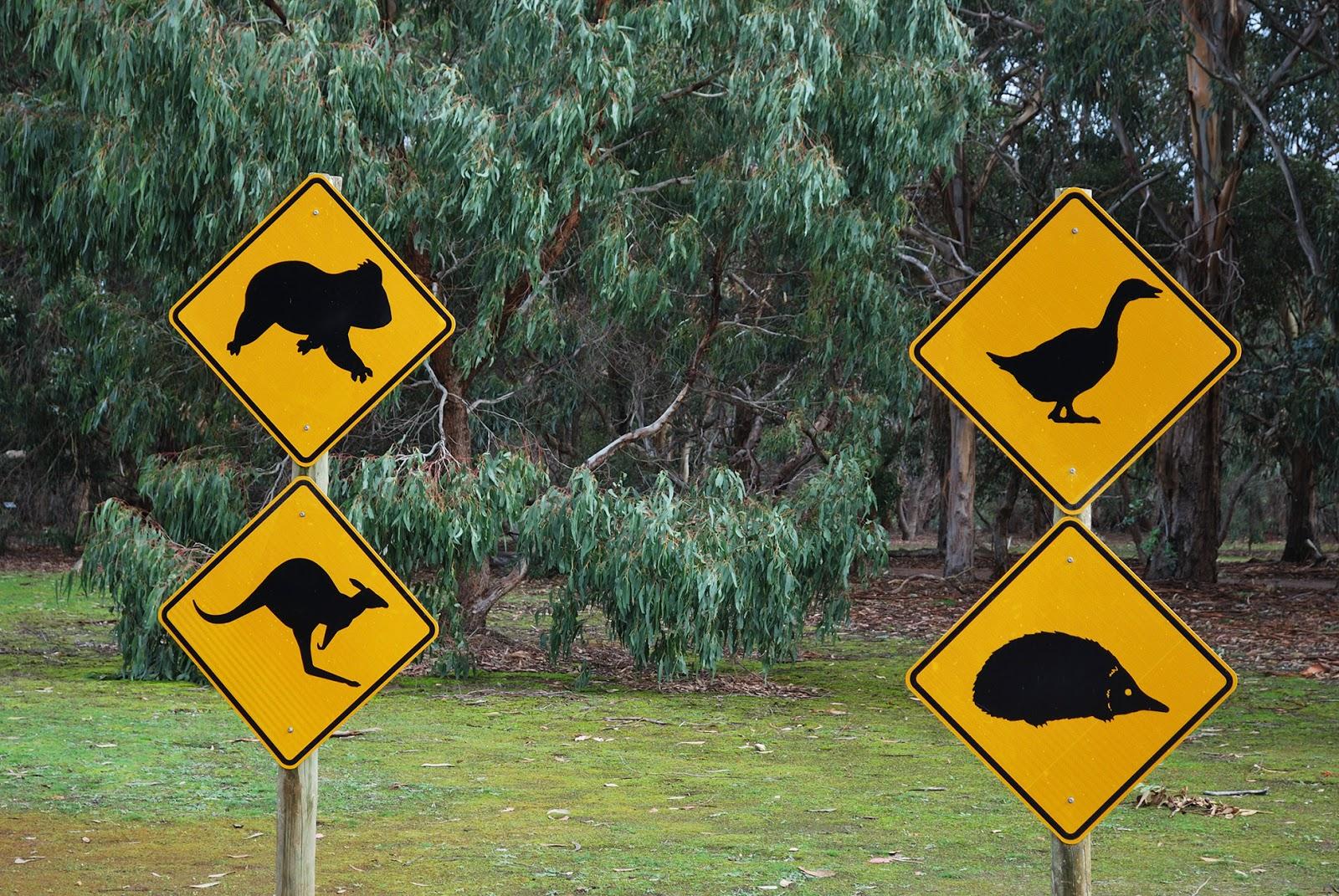 hanson bay wildlife sanctuary kangaroo island adelaide australia