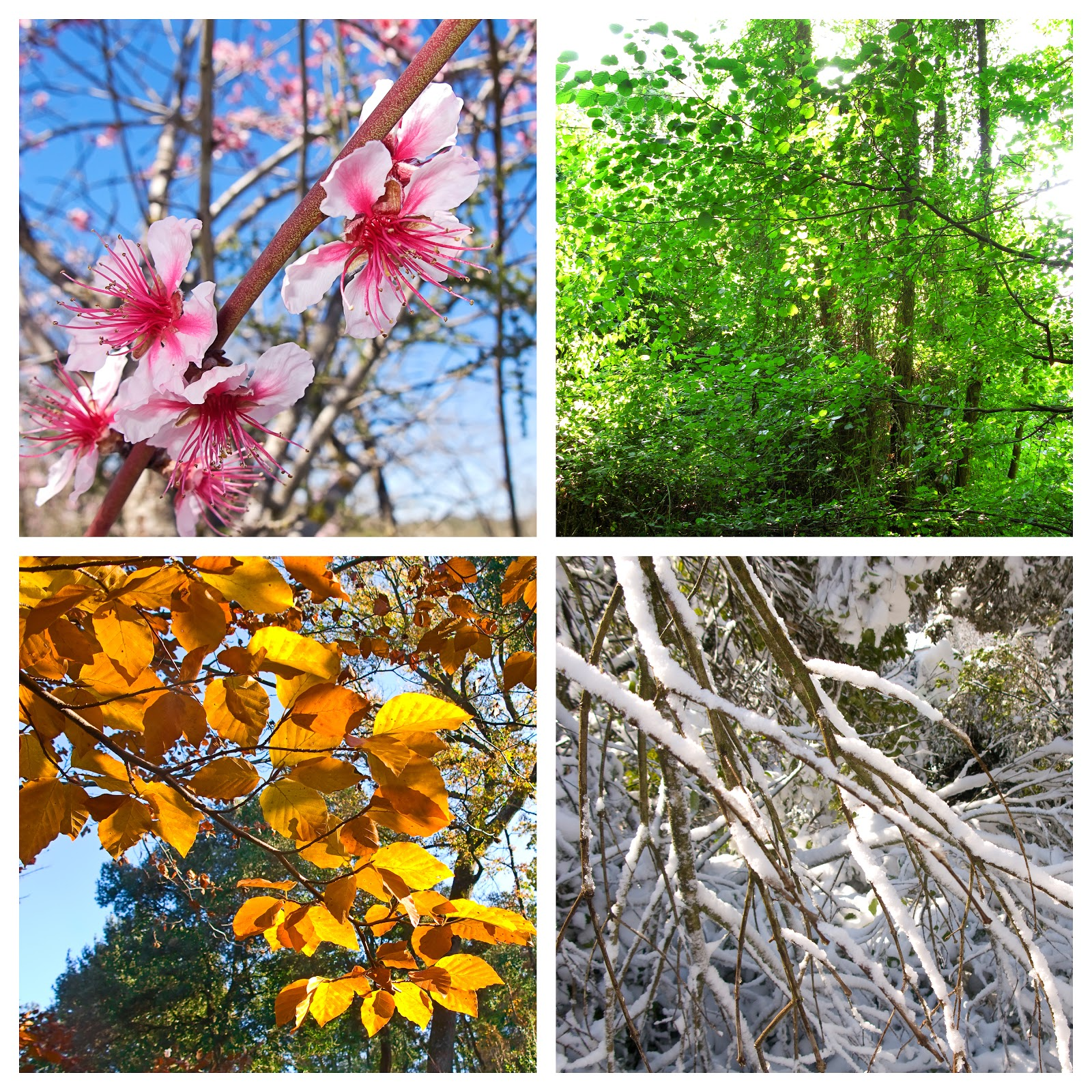 Caring For Flowering Plants Through The Changing Season