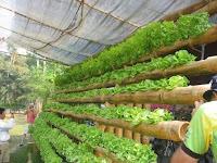 Huertas caseras con cañas de bambú