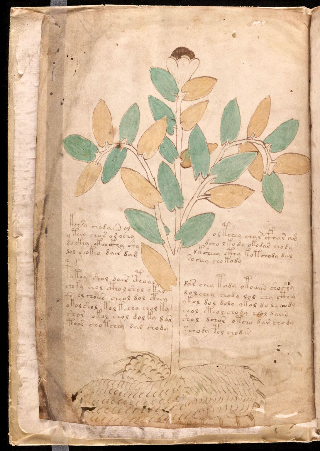 manuscrito004