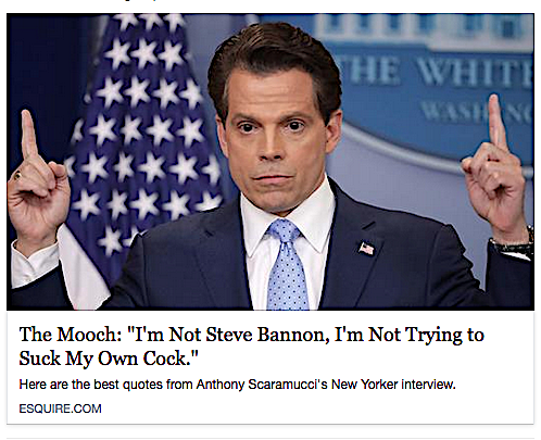Image result for scaramucci quotes