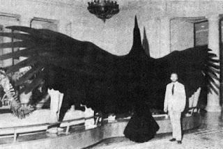 Argentavis Magnificem największy ptak latający na ziemi