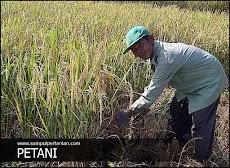 5 Kendala yang sering dialami oleh para Petani
