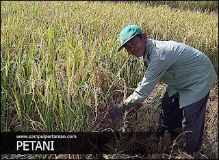 7 Alasan berkurangnya minat generasi muda menekuni dunia pertanian