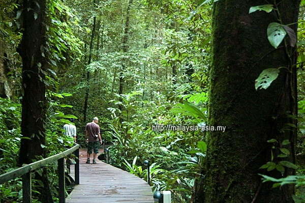 Gunung Mulu National Park Trail