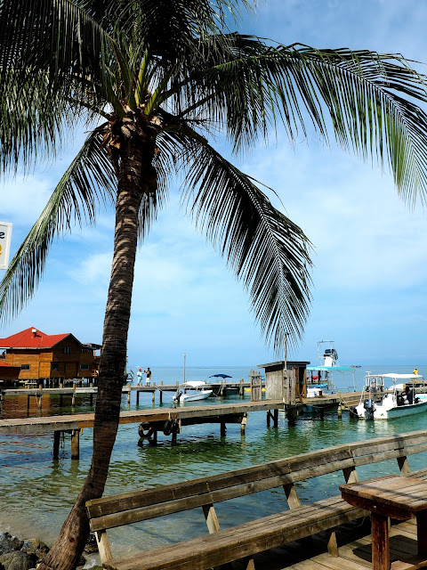 Palm tree by wooden docks in West End, Roatan Island, Honduras