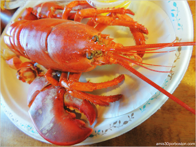 Chiringuitos: Lobster Shacks en Massachusetts