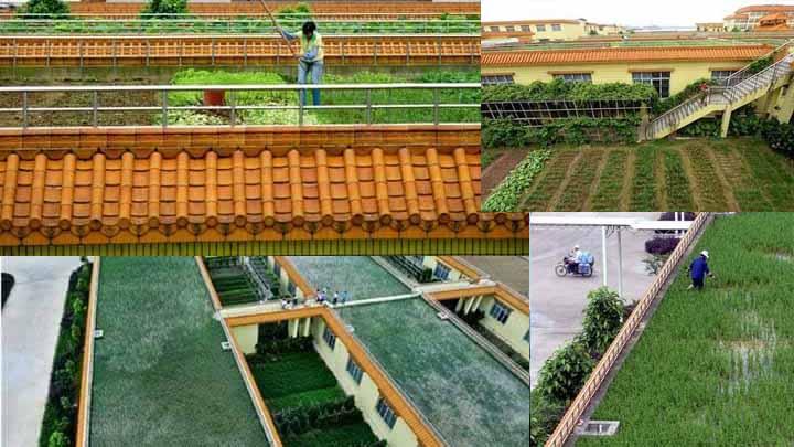 Konsep Pertanian Di Atas Rumah Untuk Mengembangkan Pertanian Yang