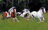 Fast horses Puzzle
