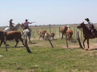 Argentiina, Corrientes, gaucho, ratsastusmatka, riitta reissaa, karjanajo, working ranch