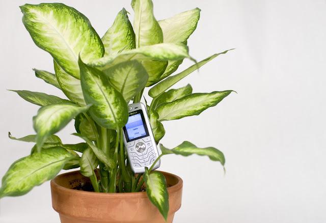 EMCD की योजना, फोन लगाइए और फ्री में पौधे घर बैठे पाइए