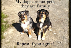 My Australian Shepherds