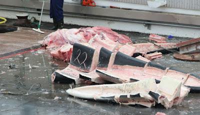 Potongan daging ikan paus.