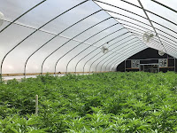Beragam Keunggulan Plastik UV Untuk Tanaman dalam Greenhouse