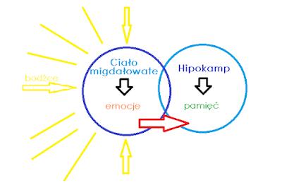 wpływ emocji na naukę i pamięć