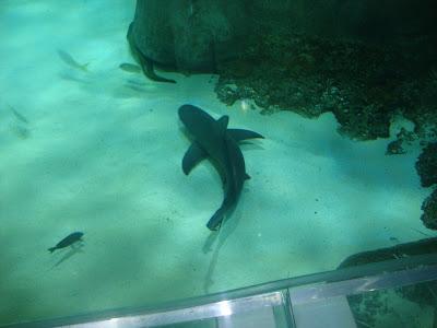 Sea Life - Orlando