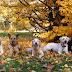 Οι σκύλοι απολαμβάνουν το φθινόπωρο...