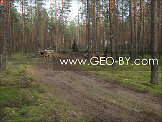 Вырубка леса в Налибокской пуще