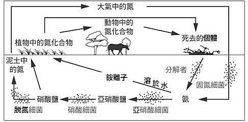 江芳銘的中學生物講堂: 生態相關試題