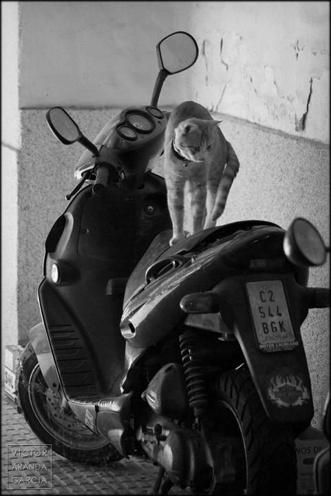 fotografia,gato,moto,murcia