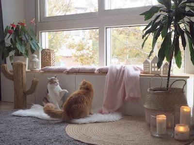 gatos-hogar-decoracion