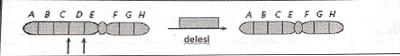 Delesi