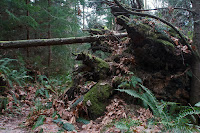 Old-Growth Windfall
