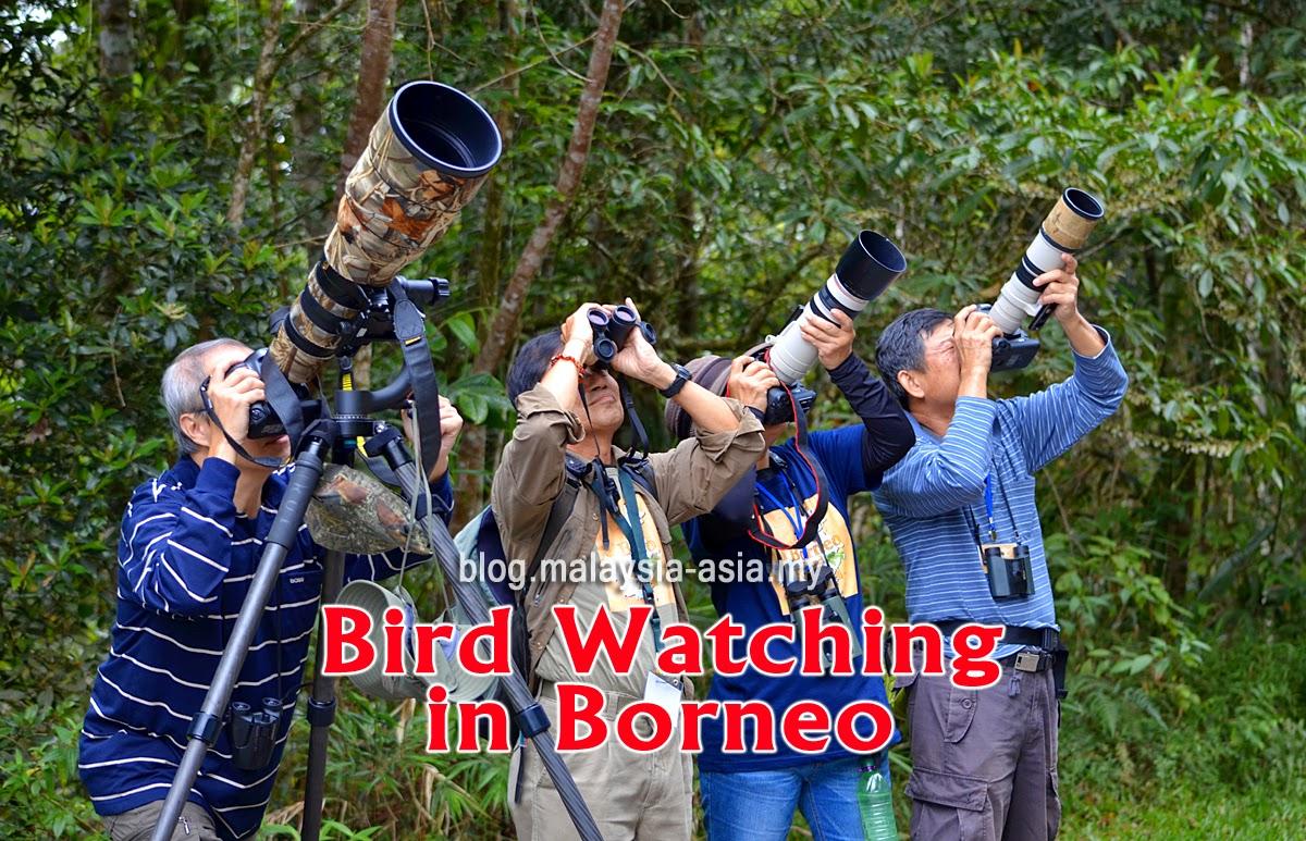 Borneo Bird Watching