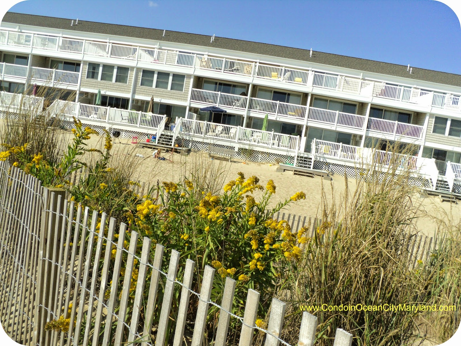Fall color at the beach  www.condoinoceancitymaryland.com