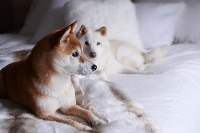 Shiba Inu dogs La Vie en Rose kimono vancouver fashion blogger Aleesha Harris #LaVieenLove