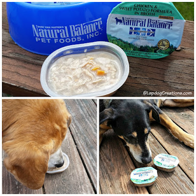 The Lapdogs think Natural Balance LID Wet Cups are Delish! #review #dogfood #ChewyInfluencer #LapdogCreations ©LapdogCreations