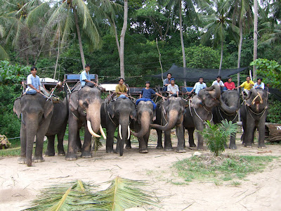 Elephant Trekking Samui Namung Jungle Trip : Samui Elephant Trekking Camp at Namuang Waterfall No.1