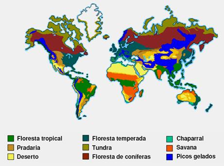 Flora no Brasil e no Mundo