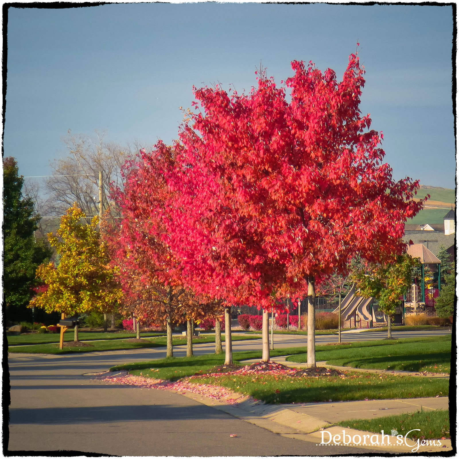 Autumn Glory 2 - photo by Deborah Frings - Deborah's Gems
