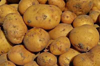 Coltivazione delle patate: come fare?
