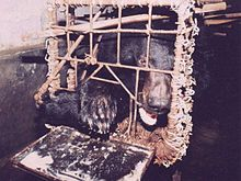 moon bear in a crush cage