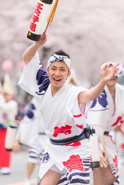 せいせき桜まつりで提灯を持って阿波踊りを踊る江戸っ子連の男性